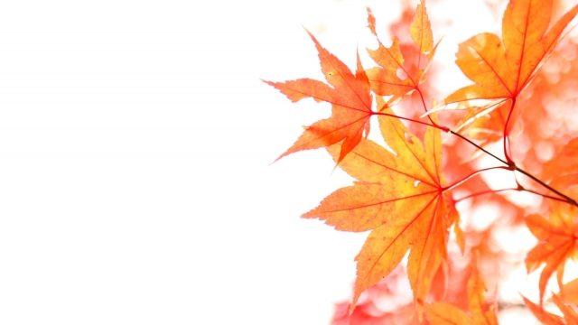 秋 10月